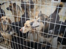 Hund Aus Tötungsstation Erfahrung