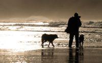 Hunde erkennen Krebs. Früherkennung Krebs